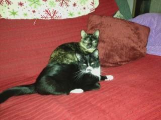 2 beautiful fun loving cats need a new home...:(