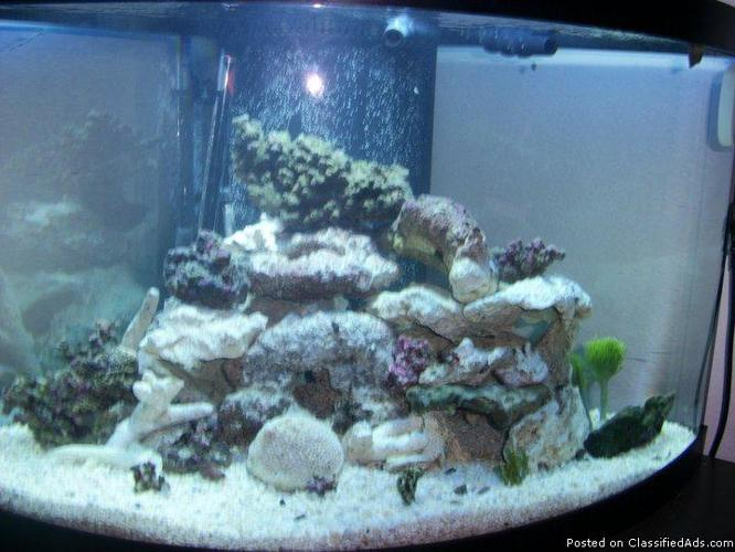 55 gallon corner saltwater aquarium price 375 for sale for 55 gallon corner fish tank