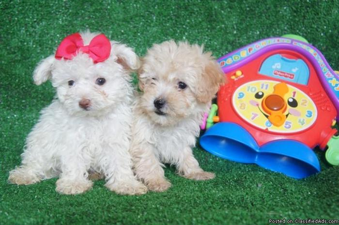 Cute puppies for sale.