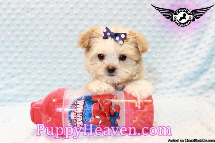 New Teacup & Toy Puppies have arrived!!! :) Las Vegas/Henderson