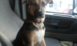 Zena is a German shepherd puppy that my husband and I got at 7wks old. We got her to live with us on the truck. I got pregnant and now live at home. when the new baby comes I defiantly won't have time to keep up with her. She needs a new family that is