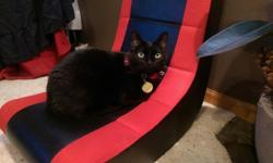 I have two very loving sister cats to rehome. Both are litter box trained, microchiped and spayed. The girls need to stay together, very attached to each other. They both will sleep with you if you let them. They follow you around and