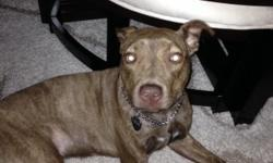 I have a 7 month old female Pitbull, she needs a good home with a yard. All shots are up to date, microchipped, and crate trained. She's very loving and great around kids and other dogs. She was born 9 Sept 13 . She's a beautiful Brown brindle color with