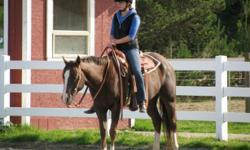 9 year old Mare for sale. Registered Quarter Horse 15.1HH. Sire is Conclusive Review and Dam is Romars Watchout. I have had her since she was 2 years old. Goes English and Western, prefers western. Been to a lot of shows since she turned 3. Hauls