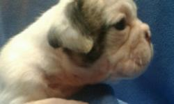 We have 7 beautiful english bulldogs. 4 males 3 females. AKC registered. Up to date on shots. Great pedigree. Will be ready for their new homes August 18th. For pics and information call or text Mike at 9373642388.