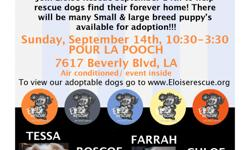 Join Eloise Rescue Spetember 14th to help Rescue dogs find their forever home! There will be many Small & Large breed Puppy's available for adoption!!!  SUNDAY , SEPTEMBER 14th , 10:30-3:30 AT POUR LA POOCH 7617 BEVERLY BLVD , LA CA 90036 Air