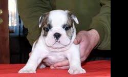 My mum ask me top post this on the web , we need a good home for this puppy text her for details