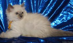 Ragdoll Kittens. TICA Registered. They have had their first FVRCP inoculation and worming. Cattery is FeLV and FIV negative. Health guaranty provided. Our babies are raised under foot and loved every day. Delivery available.