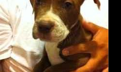Adorable pitbull puppies ready to find a new and loving family. These Puppies is not intended for fighting. Call me if you have any questions. 760-294-0163