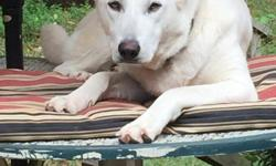 White German Shepherd puppies born July 1 ready for new home onSeptember 1 parents on premises excellent bloodlines