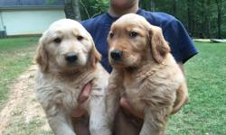 I have 2 adorable male golden retriever puppies available.They are eight weeks old.They areAKC registered. If interested you can contact me       (706) 968-1722.