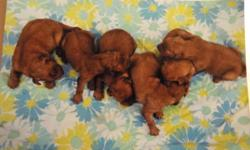 AKC Golden Retriever puppies. $800 for males and $850 for females. $200 deposit to hold a puppy. CASH ONLY. Will be ready to go September 2-9. Call 608-387-2357 or email susan_kim7@hotmail.com for more information.