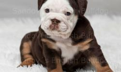 English bulldog Coming soon! New Litters englishbulldogriverside.com/future-breeder/ Puppies will have the first set of shots, deworming, and come with a health guarantee of one year. AKC registered You can send me a text or call at 951-756-2034 or visit: