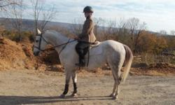 Elegant Appendix QH gelding half lease at outdoor facility. 15'2 nice temperment, smooth gaits, awesome canter English/dressage type.Training Level.Free Lunges. Round Pen trained. Knows all verbal commands. Experienced rider only. $375 per month