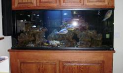 215 gal Aquarium for sale - Price: 4000.0 Or Best offer (Click an image for full size) Ad # 3642274 Contact Tony Phone 916-337-4702 City Sacramento Zip 95826 Created December 2, 2010 Expires June 2, 2011 Viewed 24 times The value of this tank is over