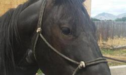 Selling a black thoroughbred quarter horse that's is excellent for breeding. We also have a brown horse so if you buy the black horse we will give you the brown one for free. This is an excellent deal 2 for 1. We have to have these horses gone by the end