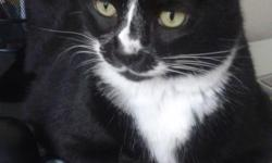 6 year-old Tuxedo front-paw DECLAWED cat looking for a loving home. We have him for almost a year but our older, resident cat will not accept him. We have tried every method possible (i.e. site swapping, wiping scents on each other, etc) to