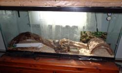 His name is Clyde and he is 12 years old I have handled him the 11 years I have owned him, he love's the outside on warm days. He eats 3 live mice a month and is in excellent health and condition, he comes with his 4' tank heat lamp and heat pad and