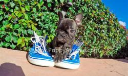 This little cutie is ?Cherokee?, our incredibly playful female French Bulldog puppy available in San Diego. Check her out in action: http://youtu.be/LMlOG6d1CF4   Registration: AKC  - 10 weeks old  - Adult weight: 20-25 lb. - Checked by a