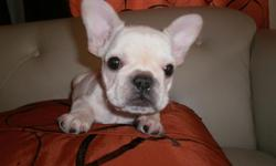 French Bulldog available she's 9 weeks old for Valentines she's fully up to date with her shot and health record she ready to go home.and she's a AKC registered call 407- 346-1245 or 407-970-2400