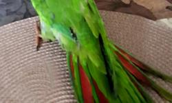 "These beautiful birds are Blue Crowned Conures,same kind of pet they used in famous movie""Paulie"".They are 2 month old,but had been hand feed and are tamed,they talk ,better say repeat,the words you teach them.Please ,call me if you are interested ..my"