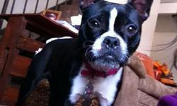 Purebred Boston Terrier to rehome. $400 firm. She is 10 mos, up to date on vaccines, comes w/ crate, leash, collar, food, pet bed. Text for info