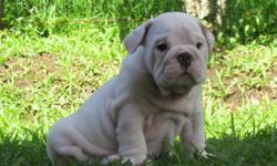 loving caring puppies for rehoming contact () -