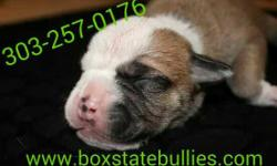 Two male bulldog puppies looking for a loving home. They have their tails docked, will be dewormed, microchiped & utd on shots. Ready to go home October 4,2014.