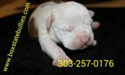 Female bulldog looking for a loving home. She has her tail docked, will be dewormed, utd on shots & microchiped. She will be ready to go home October 4,2014.