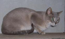 Mother purebred Burmese she needs a family and love.7months clean. has shots Healthy.. deposit is refunded when she is spayed. so she is actually FREE.