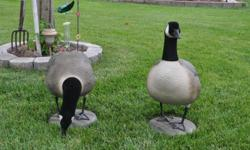 12 Full body candan geese,feeders and uprights, flocked heads,only used twice.