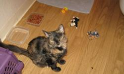 Onyx is a beautiful tortishell 9 month old spayed female; all shots arecurrent; the kitty is a rescue that is ready for her forever home; she is a little scared of new situations and would do best in a home without a lot of other animals or small