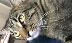 Little buddy is a good cat but he needs a new home
