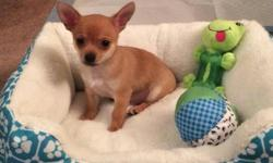 I have a 2 month old male chihuahua puppy named Tanner. Sale price is $375. If you are wanting to purchase all other accessories, I am asking for $475. These accessories include a dog carrier (paid $50), wire crate (paid $65), food and treats, food