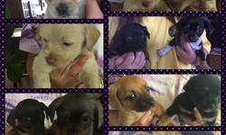 Very cute and playful 6 1/2 weeks old (520)3026972