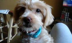 Cute bam bam needs a new home...im moving and i cant take him wit me...:-( 4098355348