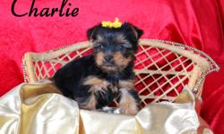 We are a small family kennel that has occasional puppies for placement. We have exceptional puppies that have been well socialized. The puppies have been vaccinated and have had their first shots.The price is $1,000  We also have exceptional