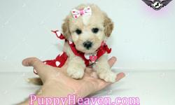 Visit our websitewww.PuppyHeaven.comnow to see pictures and info for all available puppies. All of our puppies are registered, small, cute, healthy, and playful and come with health guaranty, free vet check and a complete puppy package.