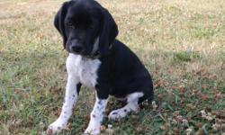 Say hi to Daisee! This tender-hearted female Beagle / Cocker Spaniel Mixis ready to go home with her new family and snuggle up! She was born on April 17, 2016. She has soft black and white fur, with a wonderful personality,she loves children