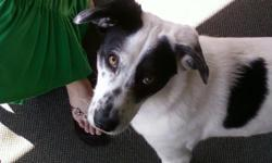Hello there, my name is Raphael and I walk dogs as a part-time job because I love doing it. I grew up in a house hold with dogs and I have one of my own. You can be rest assured that your dog is in great hands! I will drive to the surrounding indianapolis