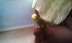 i have a double yellow headed amazon,he is hand tame but has his days.he spends his days out of his cage and we pupt him in at night for bed and cover him unless he doesnt want to go in so we leave him out and he will go in in the middle of the night.he