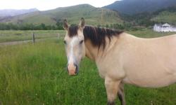 15 year old Dunn Mare. Approximately 15.3 hands. She is well broke for pleasure riding, wild game packing, and mountain riding. She needs a little work because she has not been ridden for a while. Buttercup loves attention and needs a good home,