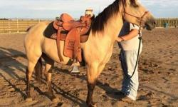 Dunny is a beautiful Dun Quarter horse mare. She can Walk, Trot and Canter in both directions and moves off of leg pressure. Neck reins very well and has been trained in a Bosal. She takes a bit easily but I usually do not ride in one as I prefer the