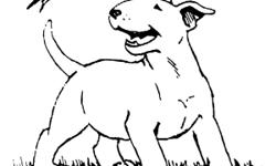 """Red Fawn colored with white markings around the neck. 4 males 2 females born May 3. AKC champion bloodlines sire red Fawn """"Thor"""" from the famous """"Rufus"""" the most awarded bull terrier ever. Dame white with black mark on eye lid. From AKC champion bloodline"""