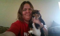 we have a female Calico cat shes great with kids, and other animals, micro chipped, just dont have the time for her and she loves to cuddle and would love to go to a home with lots of love to go around.