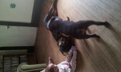 I have a one year old female german rott can not keep her becuse grandkid is allergic