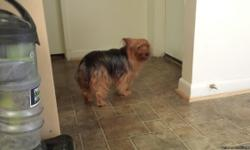 Wonderful, energetic, family friendly, 7 yr old 8lb Yorkie. She is fixed. Moving and they don't take pets:( If you can provide a good lovable home she is available!