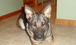 Female spayed German Shepard. Very obedient,loves to play ball. Has never lived with children. Has been to advance training class. We are moving and cannot keep her and would love to find a great home for her. Up to date on all shots.
