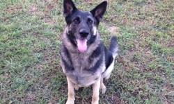 SISTER IS AROUND 6 YEARS OLD SPAYED LIKES TO GO INDOORS WHEN ITS HOT AND OUT WHEN ITS COLD GOOD WITH DOGS AND LOVES HANGING OUT WITH KIDS PLAYING IN THE YARD AND PLAYING WITH TOYS CALL or text IF YOU WOULD LIKE TO MEET THIS SWEET GERMAN SHEPERD 770 851