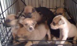 Hi have 6 puppies for sale they need a home A.S.A.P. please there very cute there 7 weeks old were born sept 6,12 there cocker spaniel mix with what?!! i don't know!! cuz my cocker left the house and came after a month pregnant. i'm only asking for a re